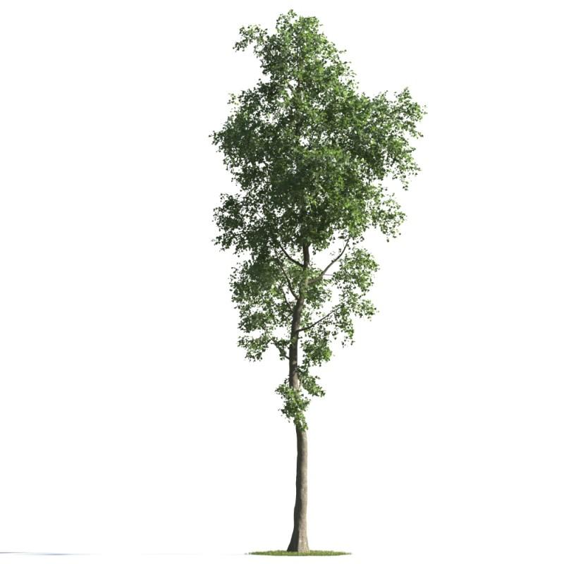 tree 77 AMC01