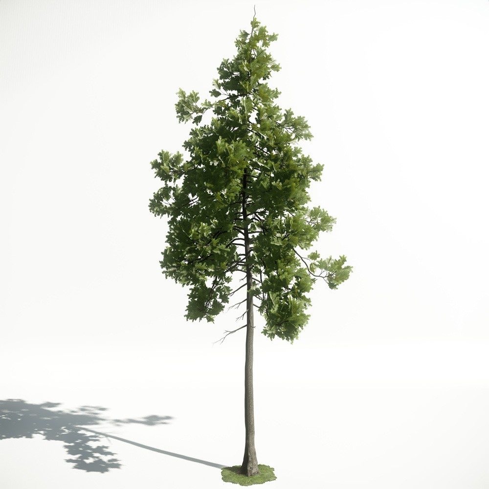 Tree 26 AM1 for CryEngine Archmodels