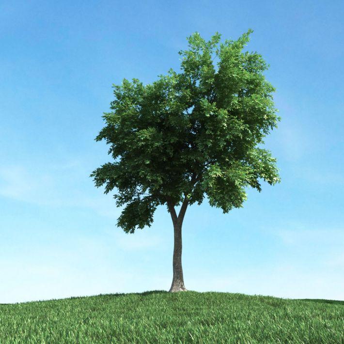 tree 39 am106