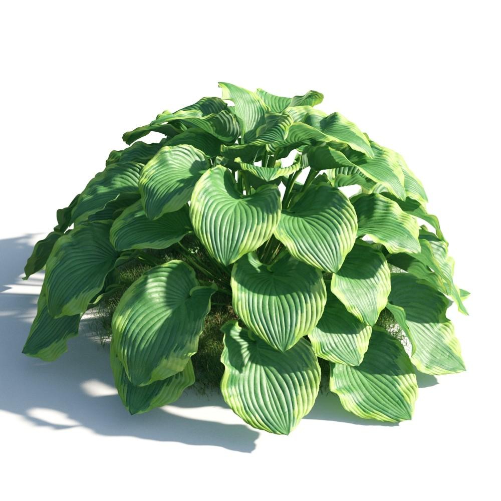 plant 50 AM183