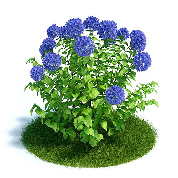 Hydrangea Plant 12 AM61 Archmodels