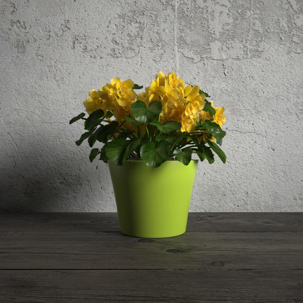 plant 36 am173