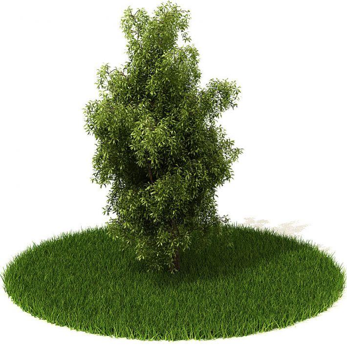 Plant 23 AM42