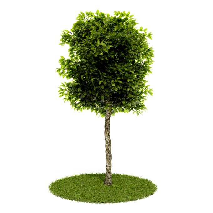 Plant 60 AM52 for Cinema4D Archmodels