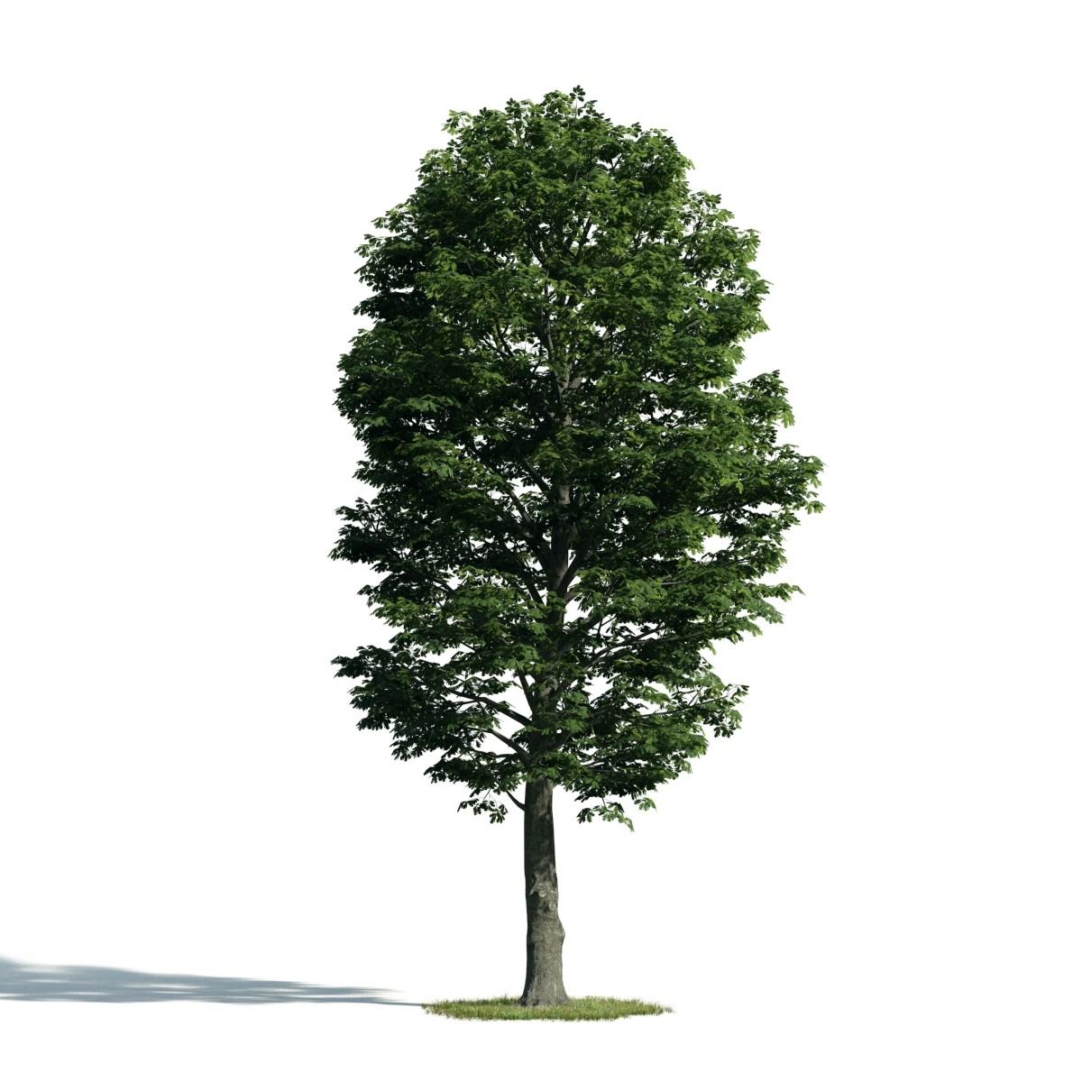 Tree 54 am171