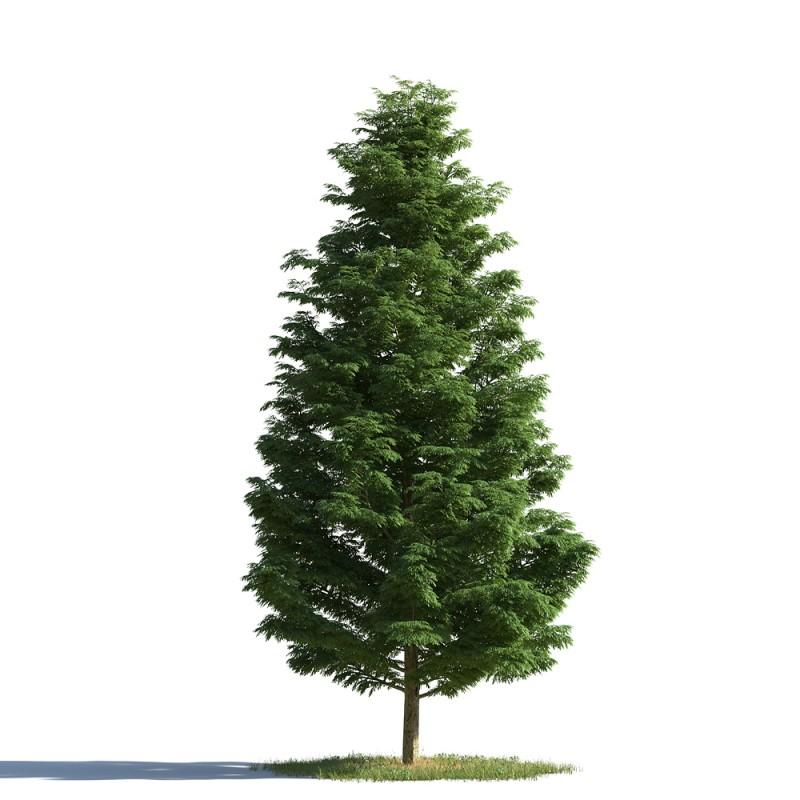 tree 16 AMC1