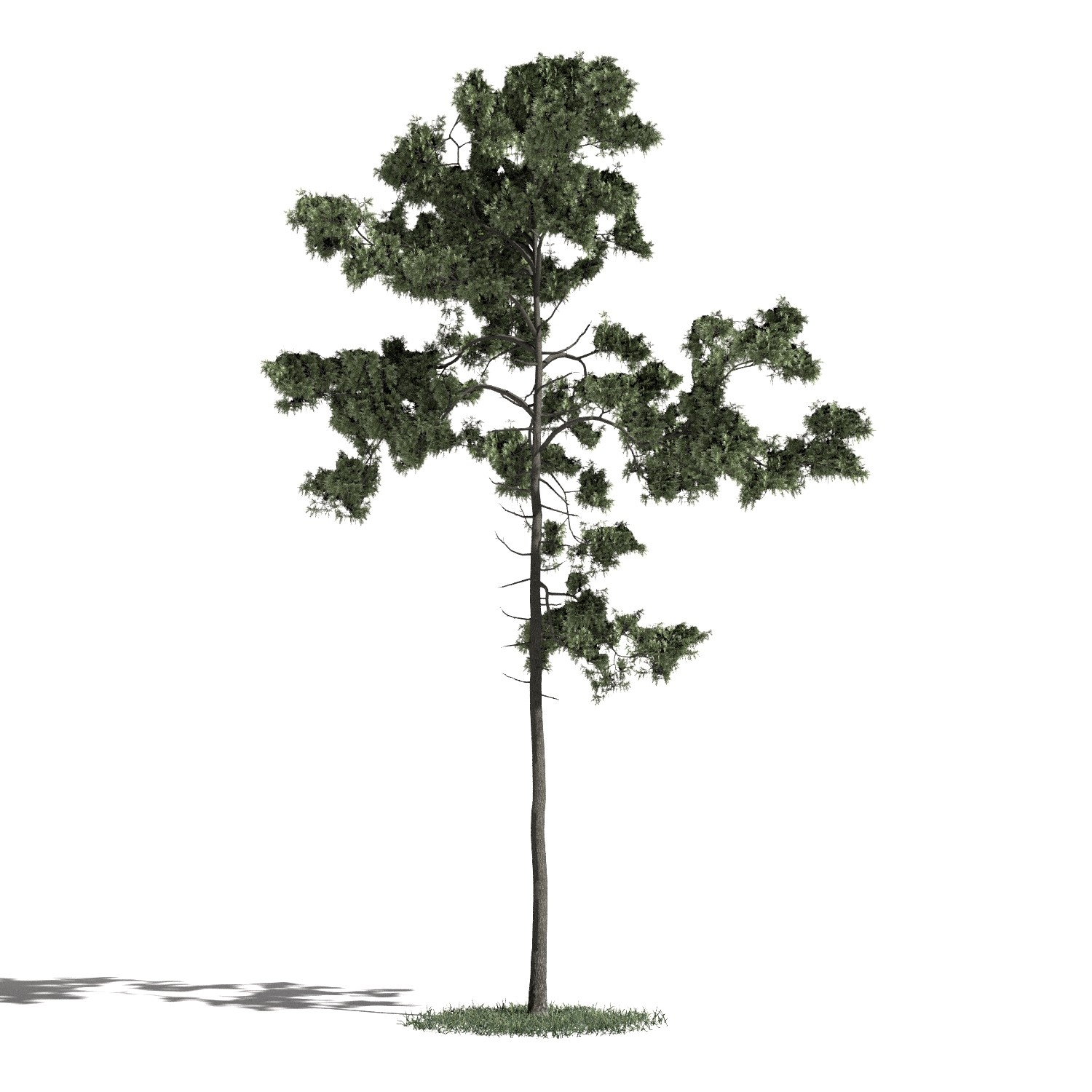 Tree 44 AM1 for Blender Archmodels