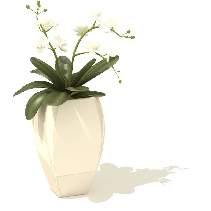 plant 51 AM41