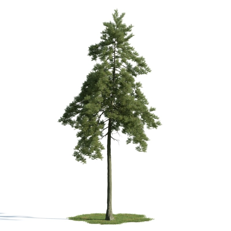 tree 26 AM163 Archmodels