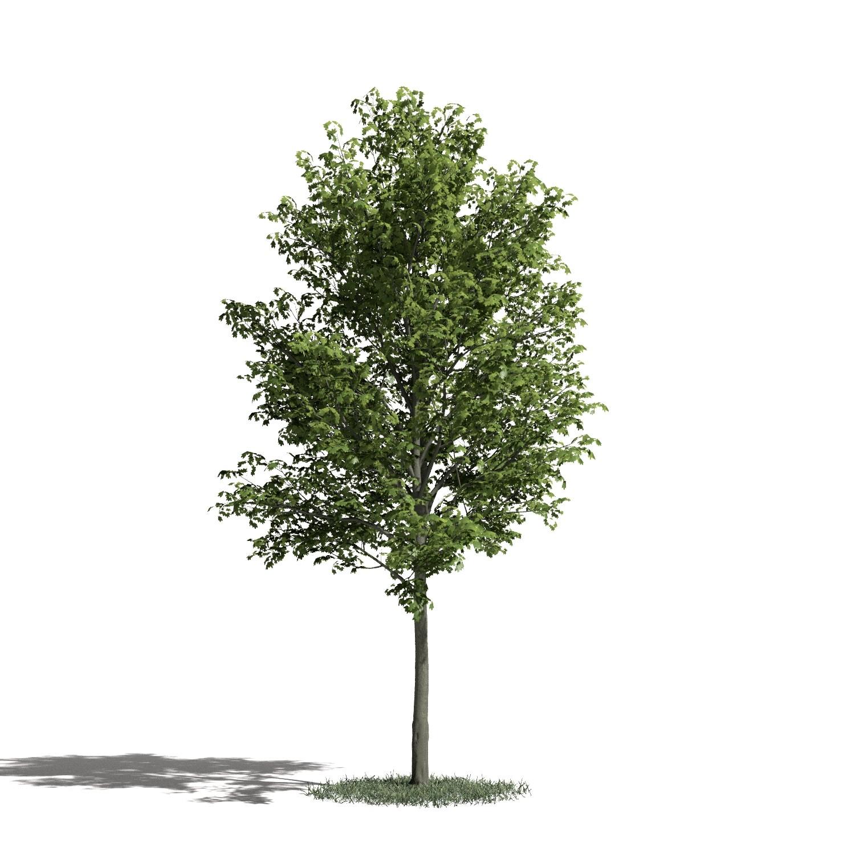 Tree 24 AM1 for Blender Archmodels