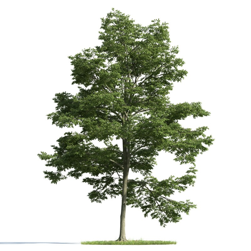 tree 22 AM163 Archmodels