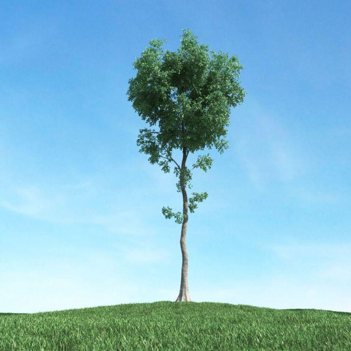 tree 27 AM117 Archmodels