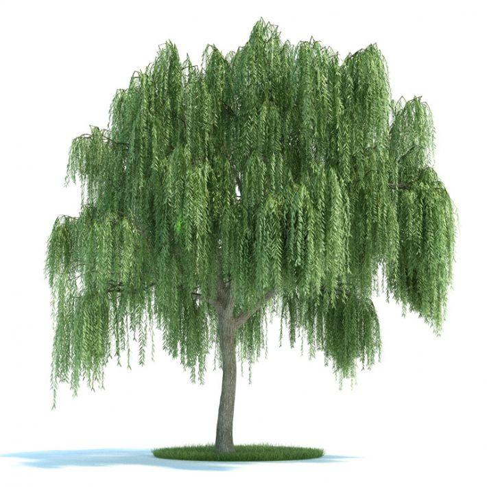 Salix Plant 45 AM58 Archmodels