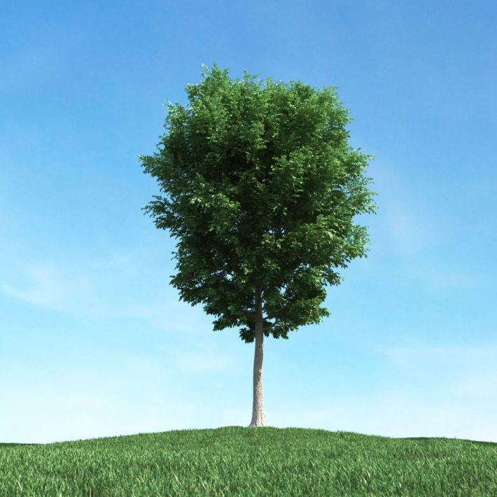 tree 22 AM106 Archmodels