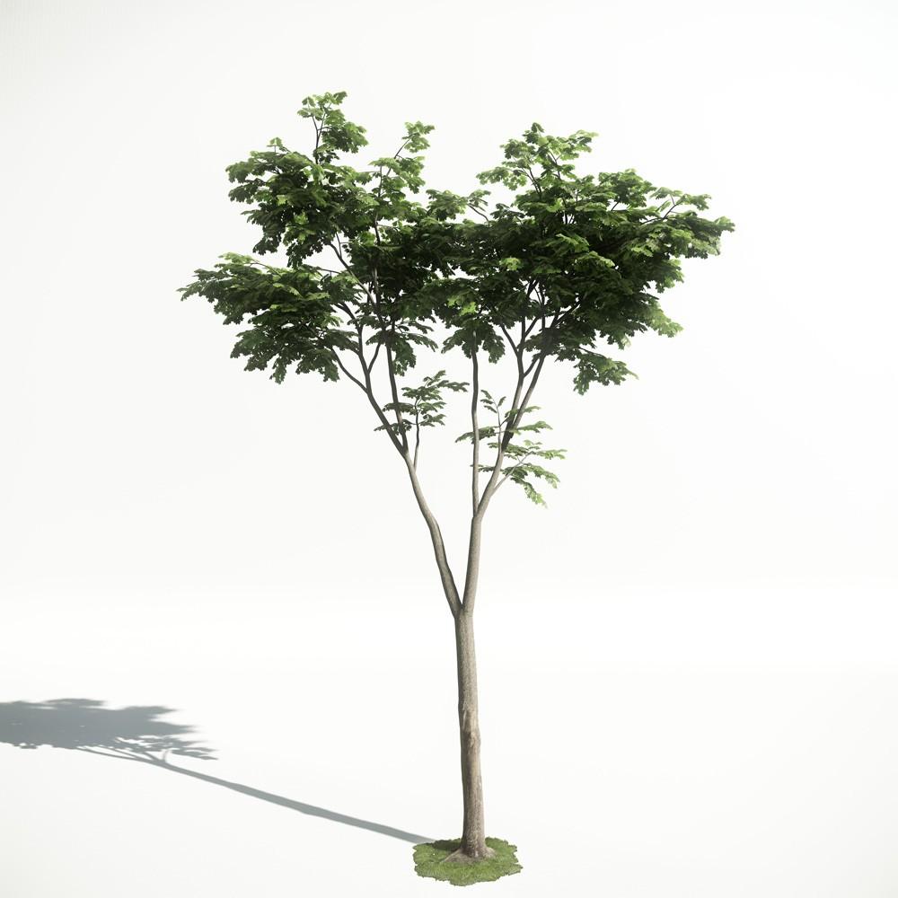 Tree 20 amce1