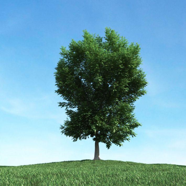tree 23 AM106 Archmodels
