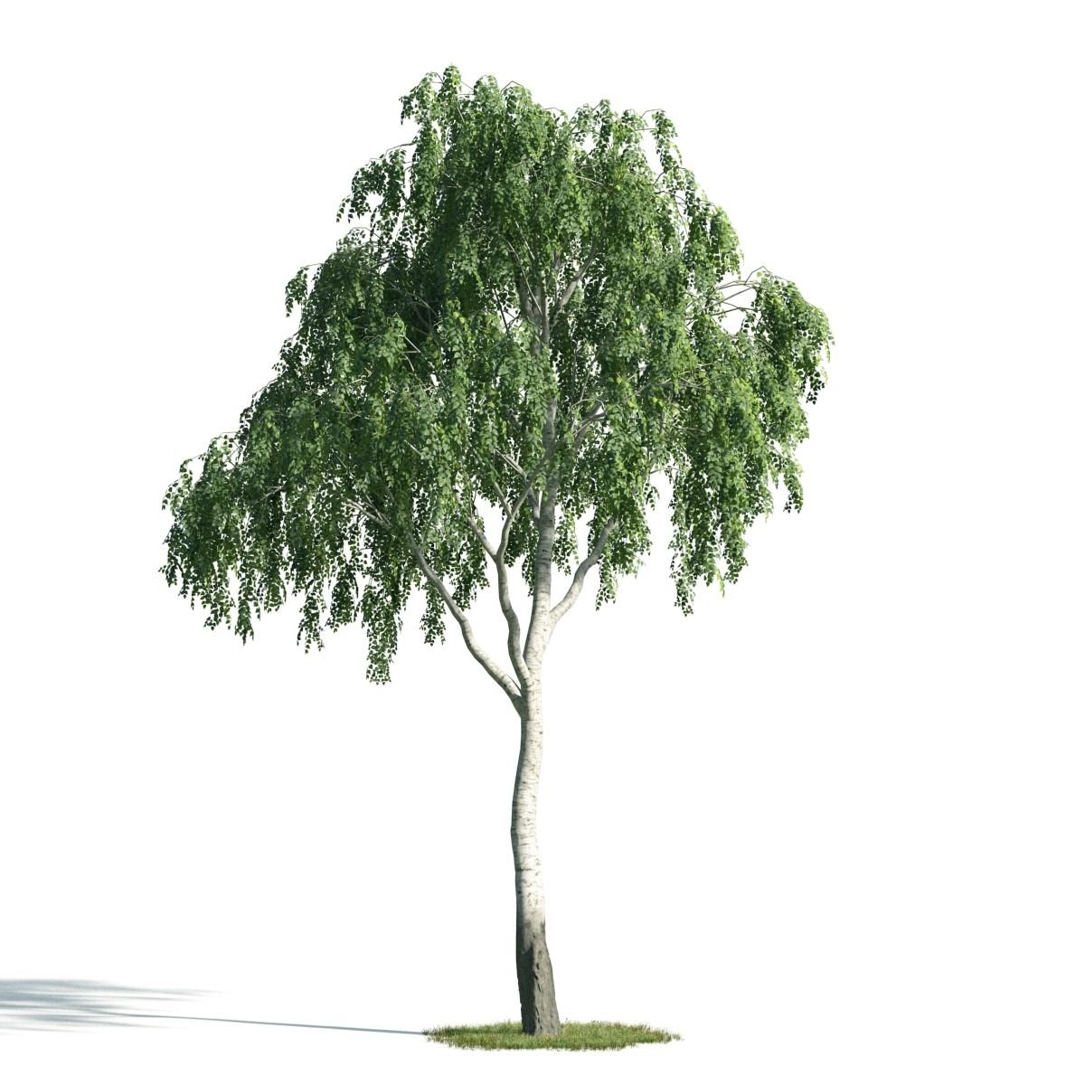 Tree 16 AM171 Archmodels