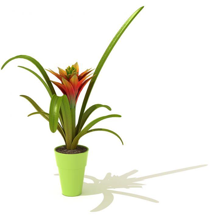 plant 65 AM41 Archmodels