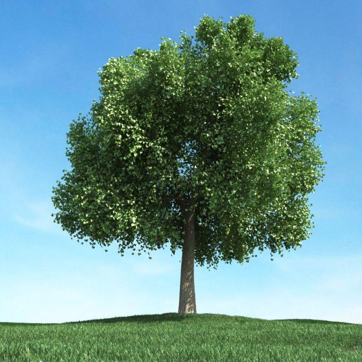 tree 43 AM106 Archmodels