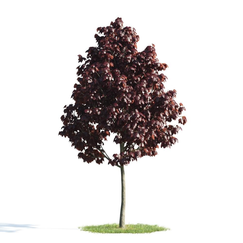 Tree 19 AM176 Archmodels