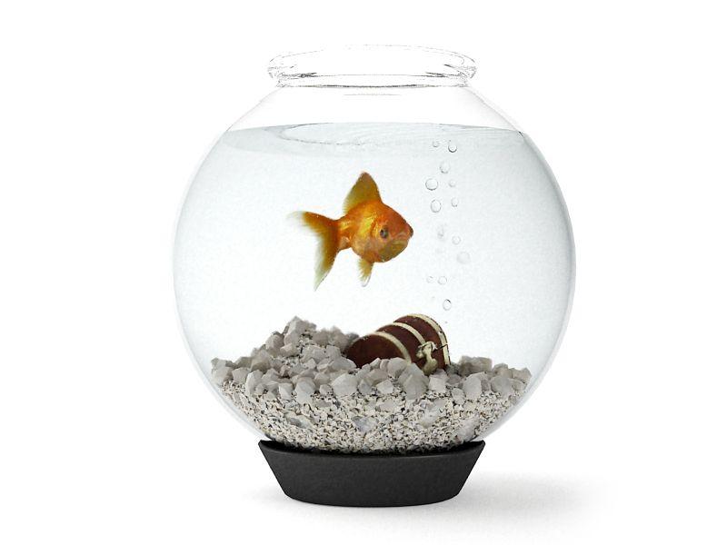 aquarium 01 am83