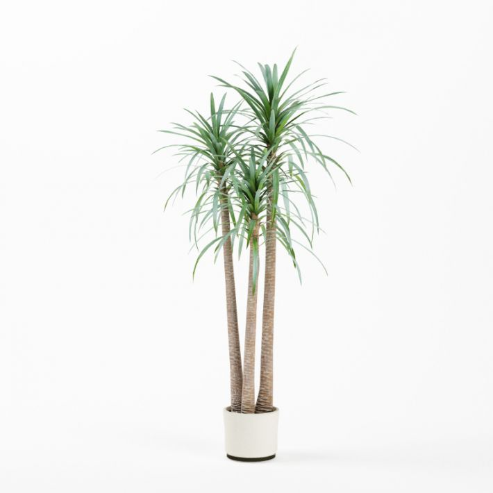 Plant 01 AM75