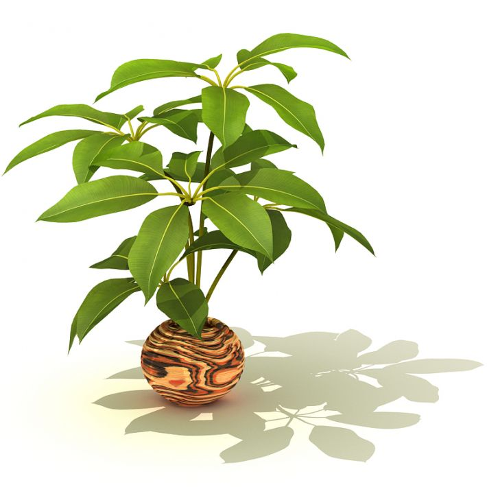 plant 56 AM41
