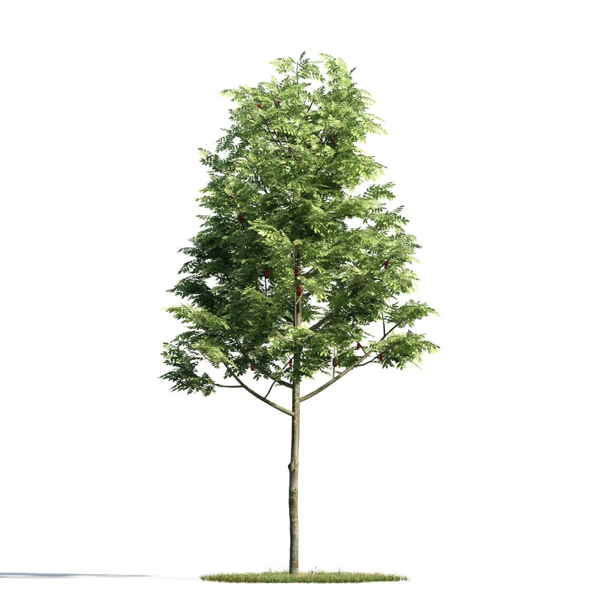Tree 2 AM171 Archmodels