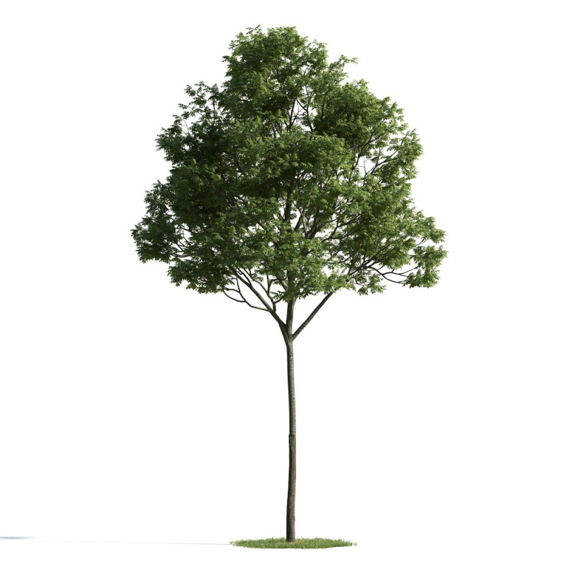 tree 38 AM163 Archmodels