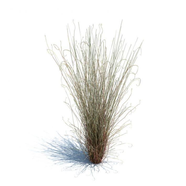Carex buchananii 100 AM126 Archmodels