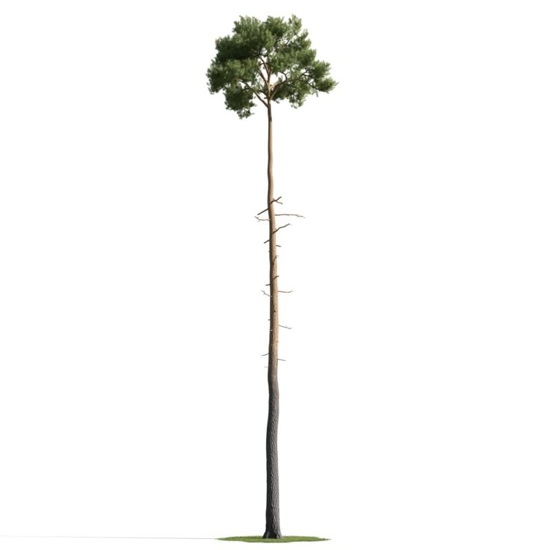 tree 43 AM163 Archmodels