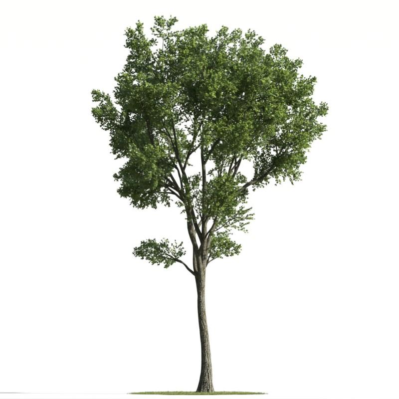 tree 89 AMC01