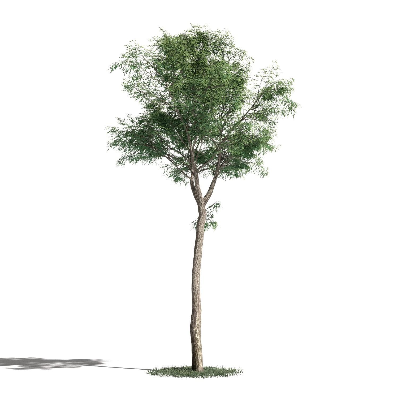 Tree 48 AM1 for Blender Archmodels