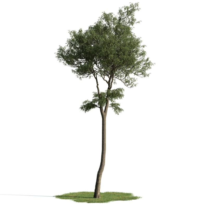 tree 46 AM163 Archmodels