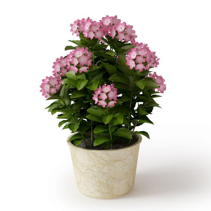 Plant 08 Archmodels vol. 66