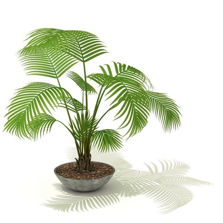 plant 5 AM41 Archmodels