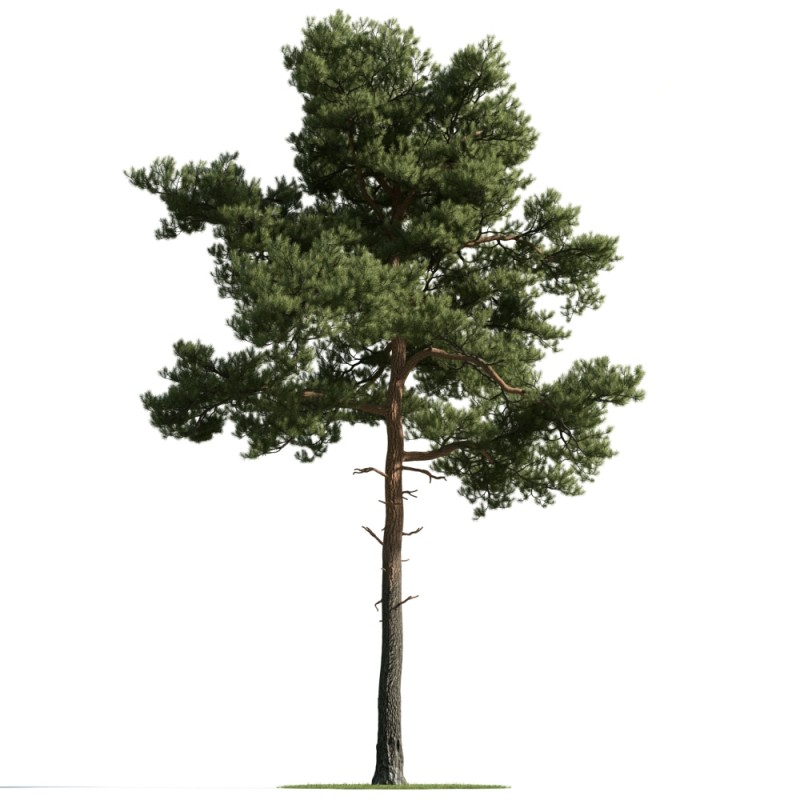 tree 35 AM163 Archmodels