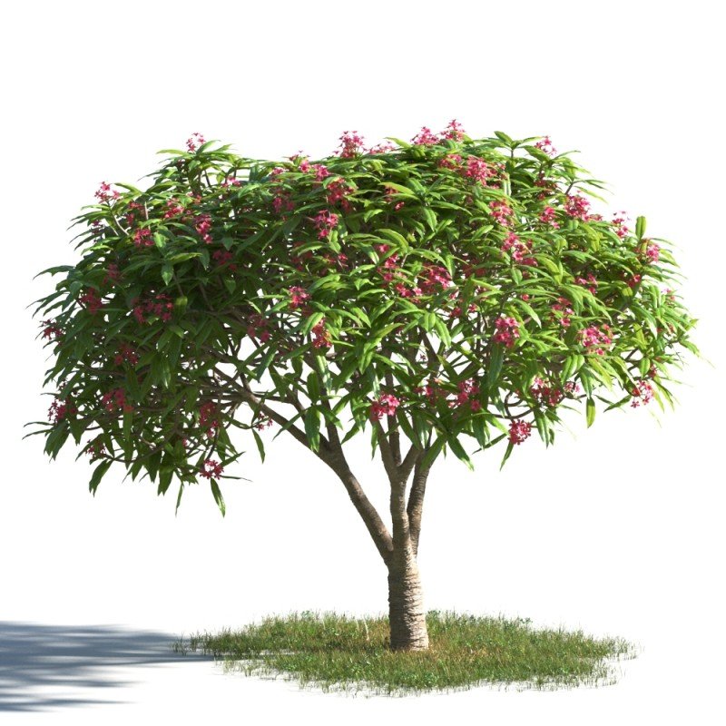 tree 21 AMC1
