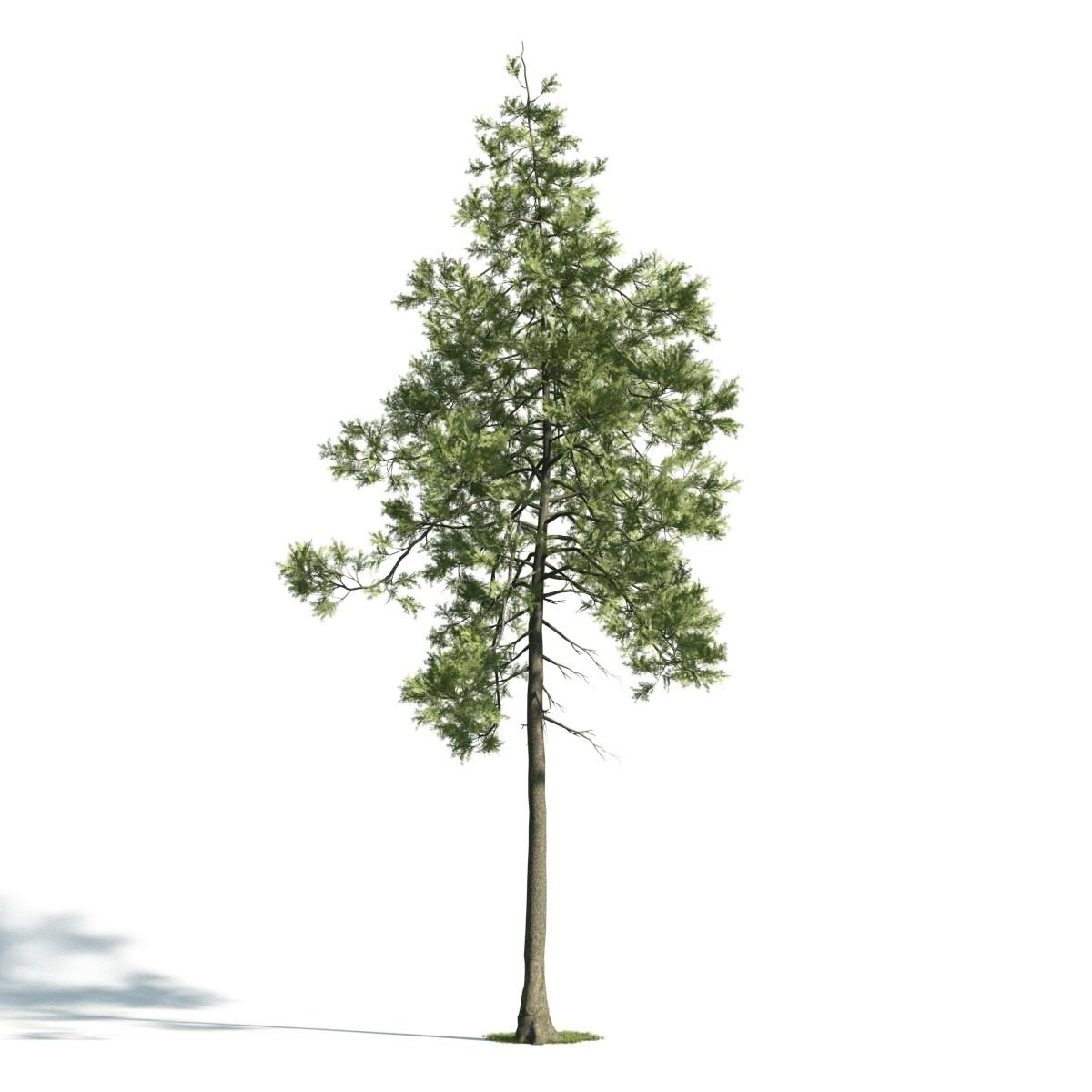 Tree 26 AM171 Archmodels