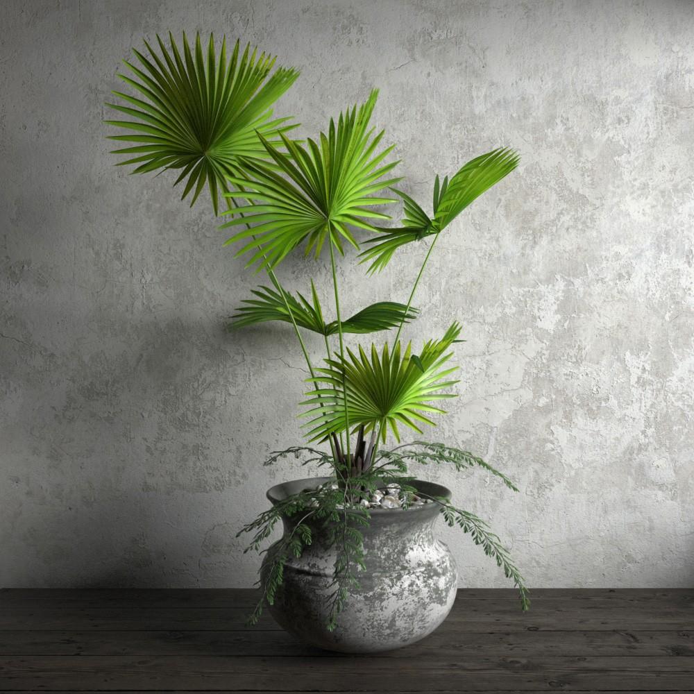 plant 24 am173