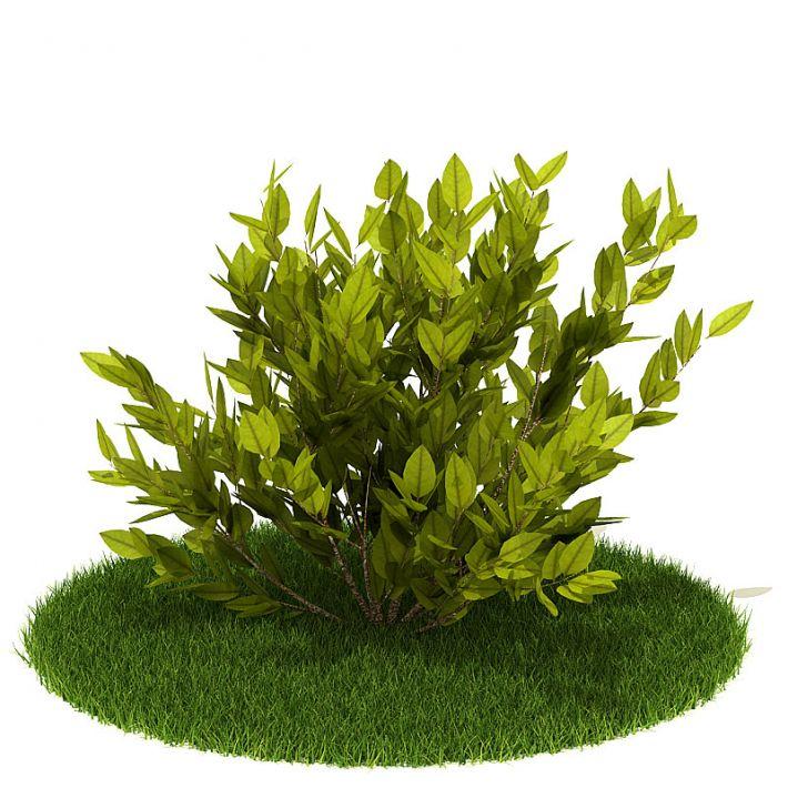 Plant 53 AM42 Archmodels