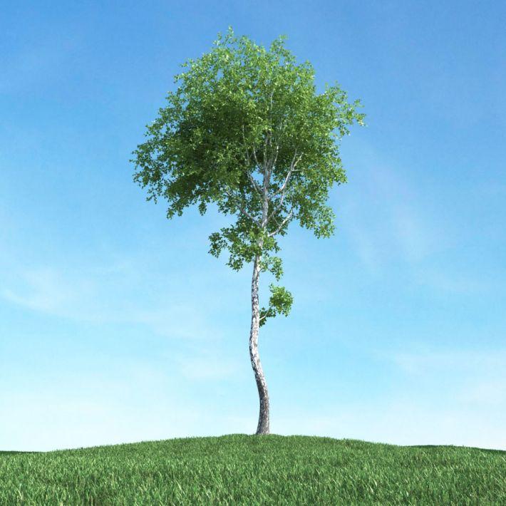 tree 23 AM117 Archmodels