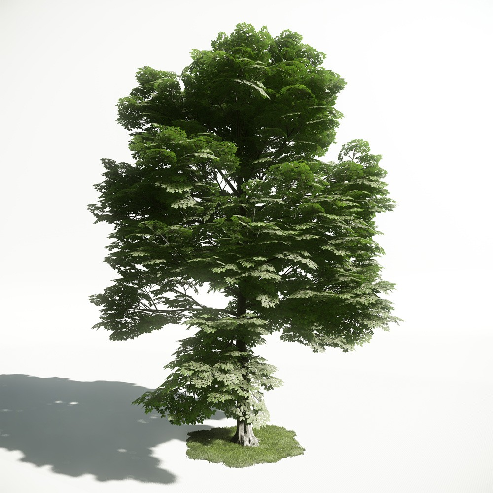Tree 15 AM1 for CryEngine Archmodels