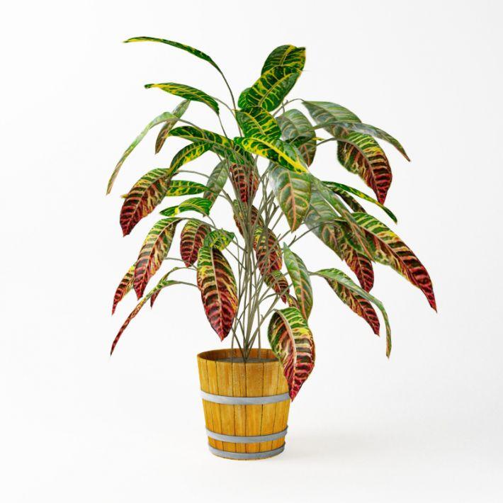 Plant 05 AM75