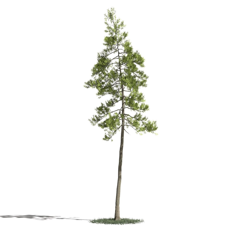 Tree 27 AM1 for Blender Archmodels