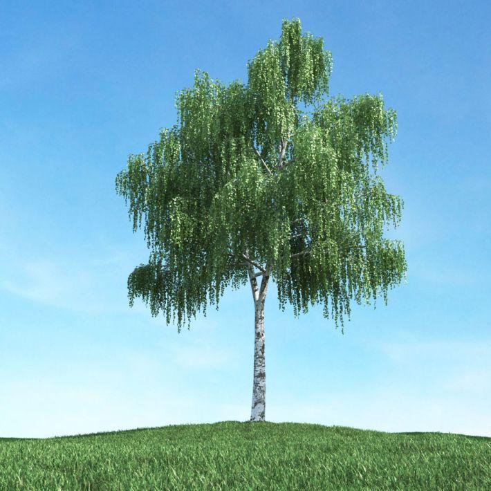 tree 19 AM106 Archmodels
