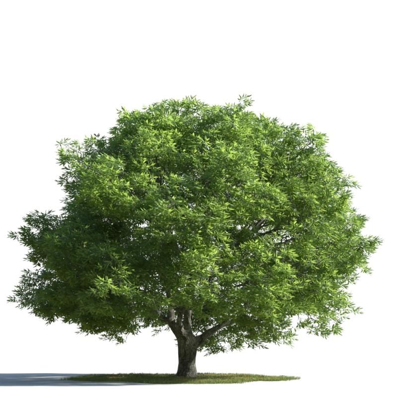 tree 35 AMC01