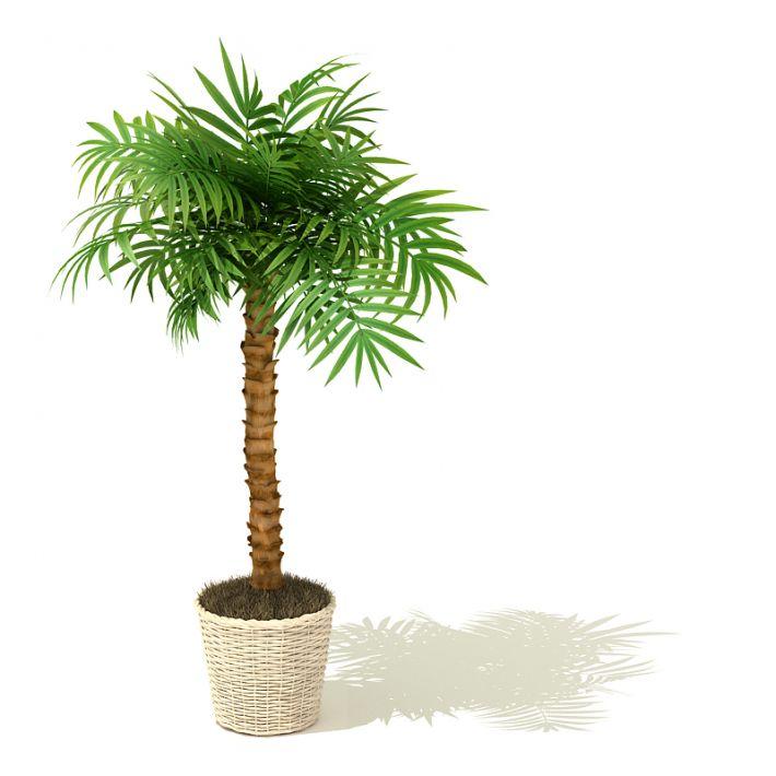 plant 7 AM41 Archmodels