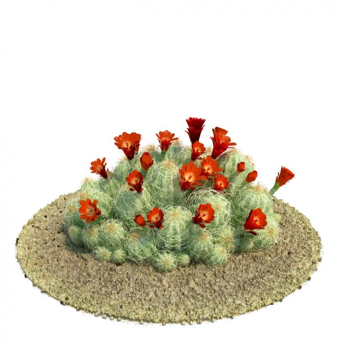 Echinocereus triglochidiatus Plant 57 AM61 Archmodels