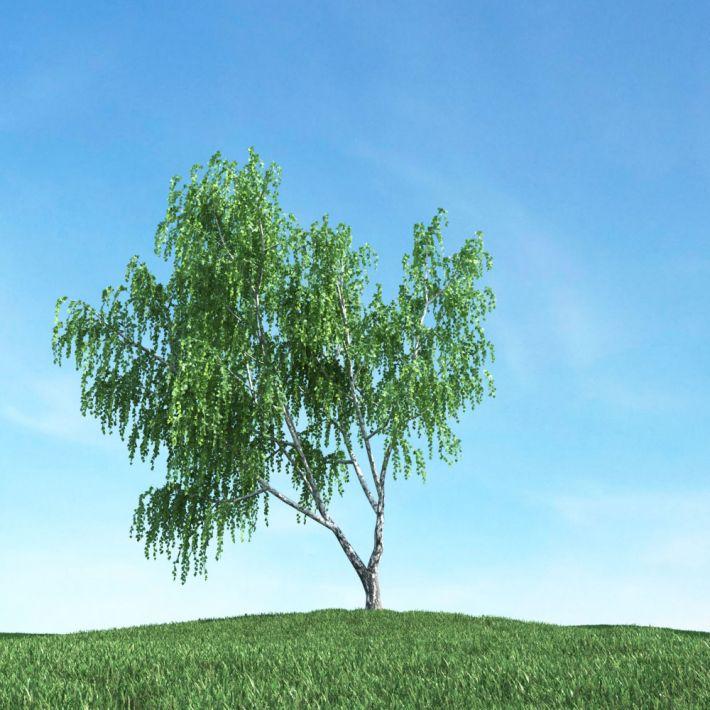 tree 22 AM117 Archmodels